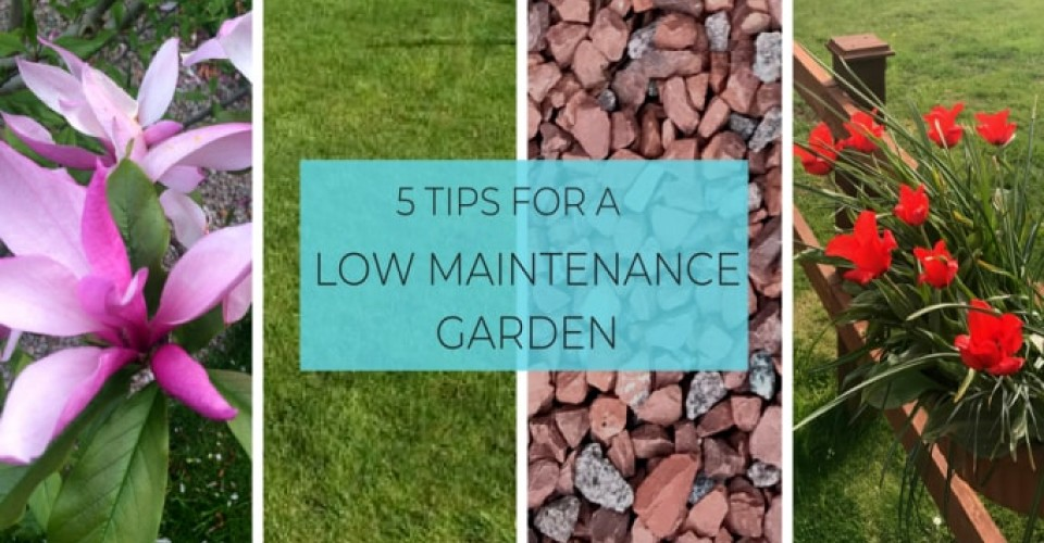 5 Tips for Creating a Low Maintenance Garden